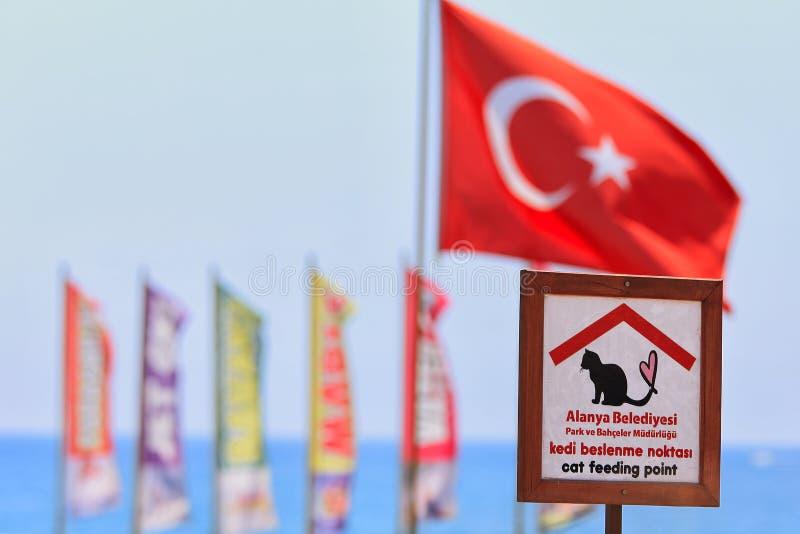 猫哺养的点 阿拉尼亚,土耳其 免版税库存照片
