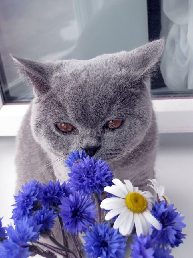 猫嗅花花束  库存照片