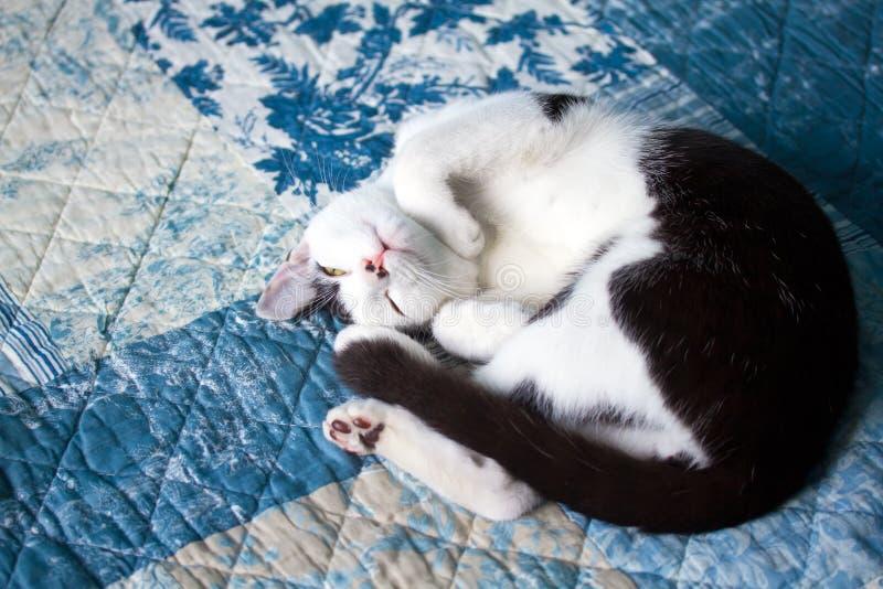 猫国内休眠 免版税图库摄影