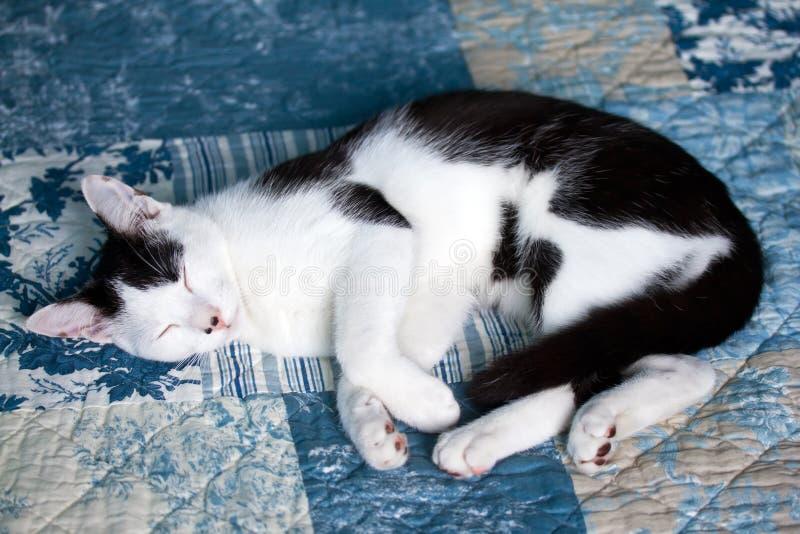 猫国内休眠 免版税库存图片