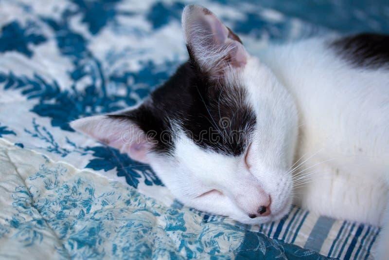 猫国内休眠 库存图片