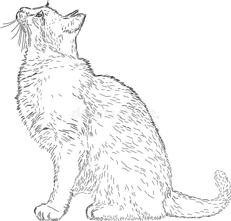 猫图画线路 向量例证