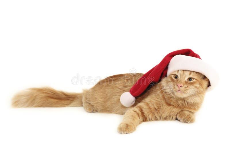 猫圣诞节红色 免版税库存照片