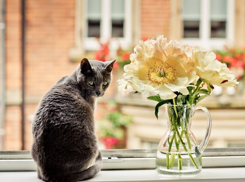 猫在与花的窗口里 图库摄影