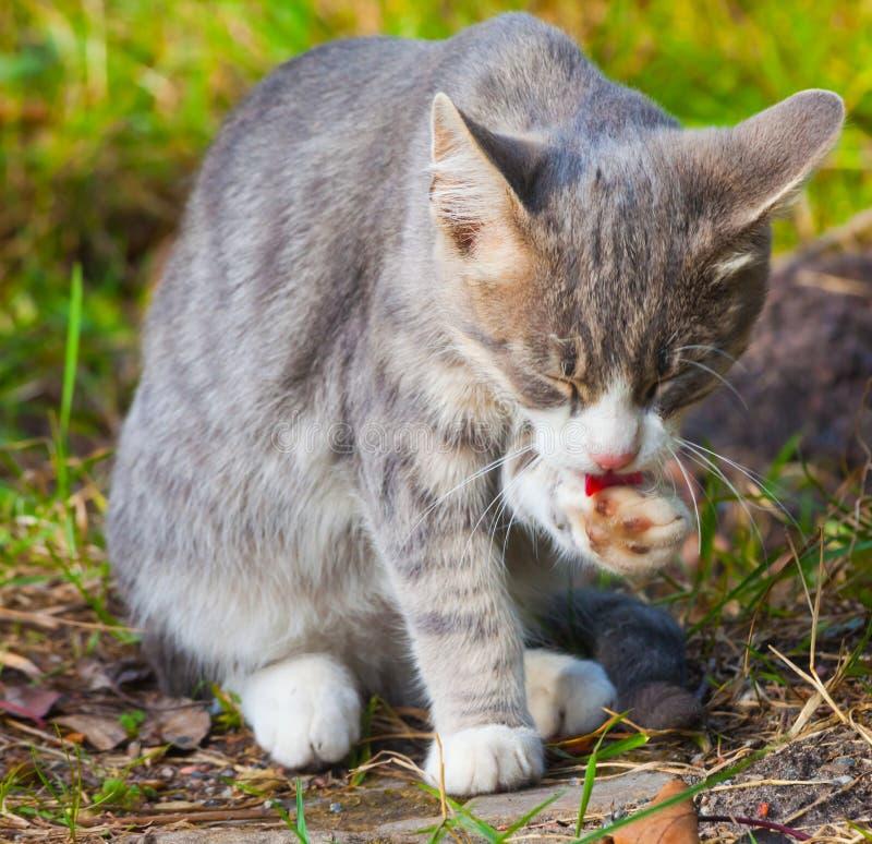 猫在与闭合的眼睛的草说谎 免版税库存图片