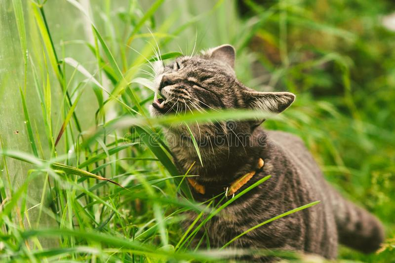 猫在公园吃着草 库存照片