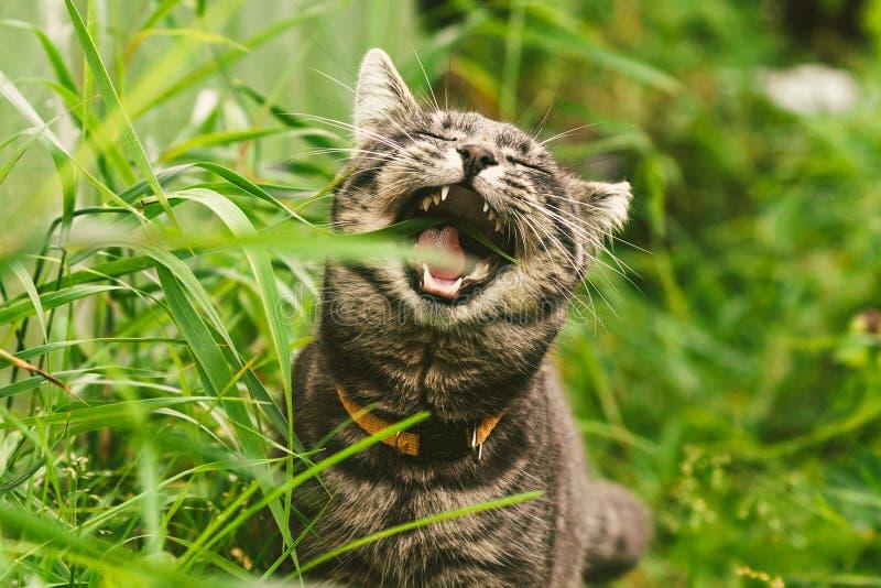 猫在公园吃着草 免版税图库摄影