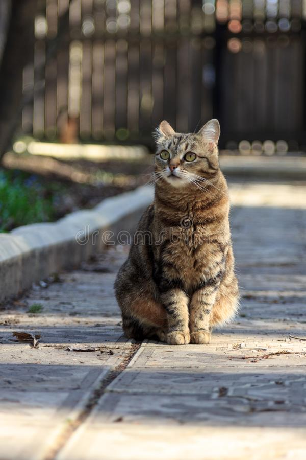 猫在公园 免版税库存照片
