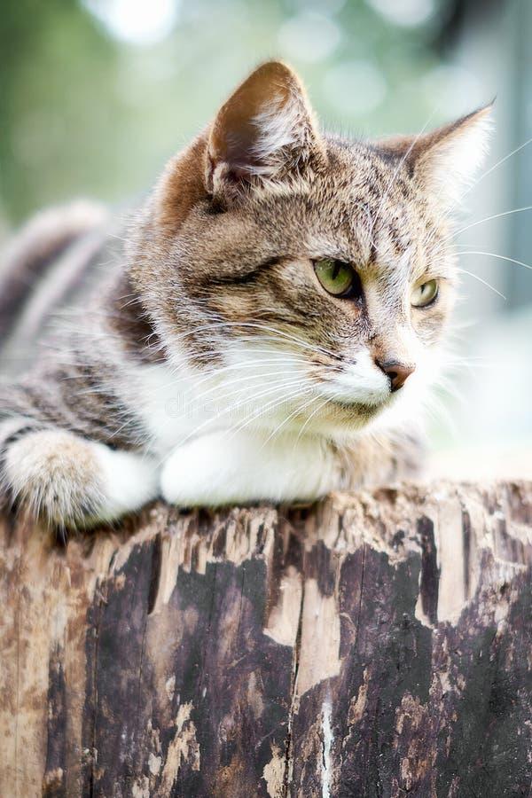 猫在围场 免版税库存图片