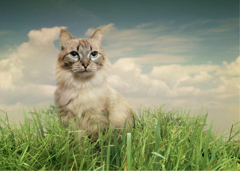 猫在夏天 库存照片