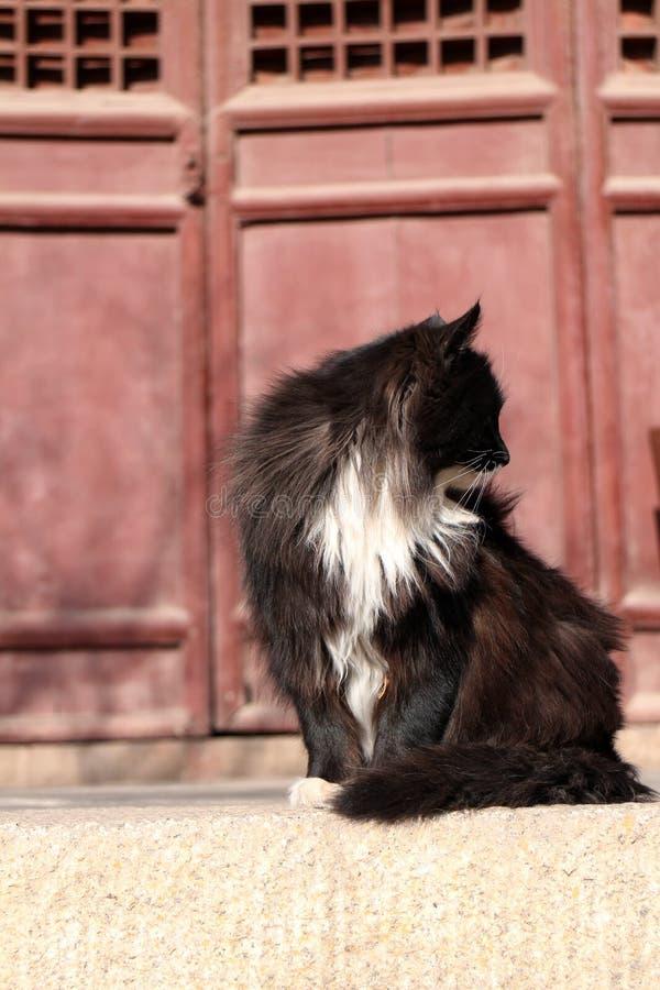 猫在寺庙` s红色doorï ¼ Œshanxi瓷前面坐 免版税图库摄影