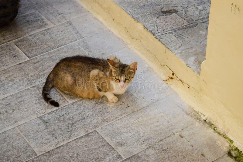 猫在希腊 离群猫在希腊 免版税库存图片