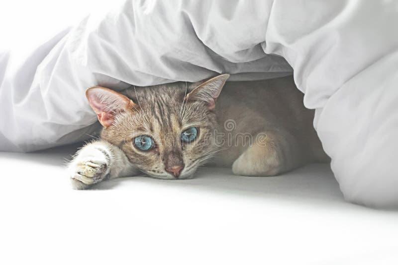 猫在床上 免版税库存图片