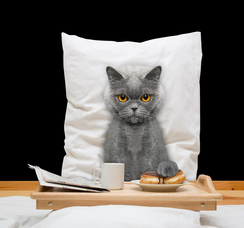 猫在床和饮料上吃 免版税库存照片