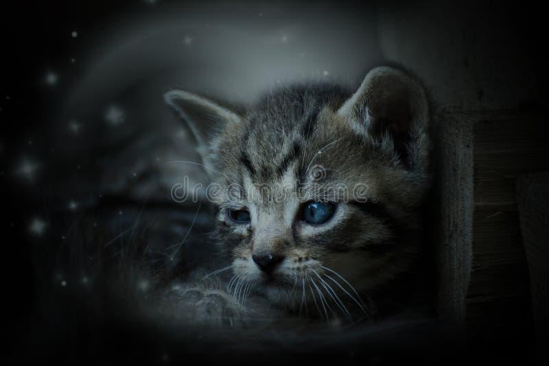 猫在庭院里 图库摄影