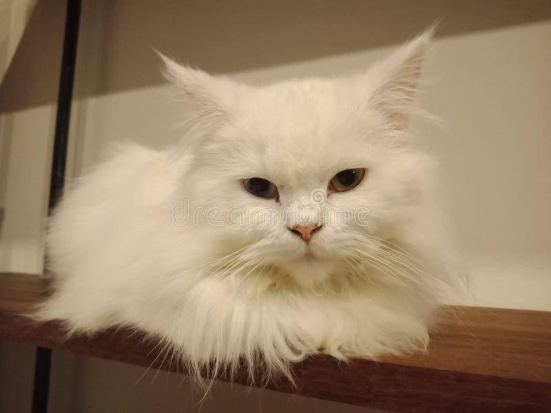 猫在我的屋子里 免版税库存图片