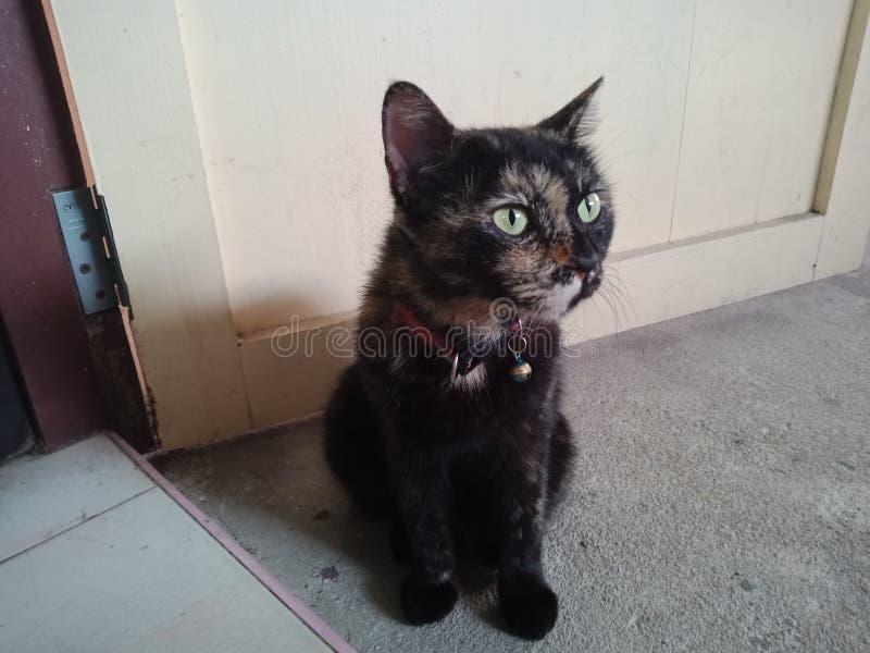 猫在我的屋子里 免版税库存照片
