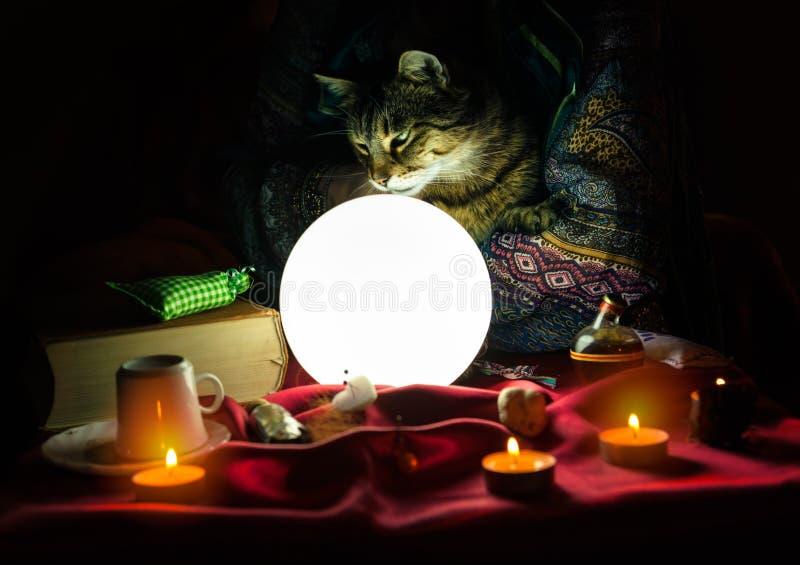 猫在手中算命者 库存图片