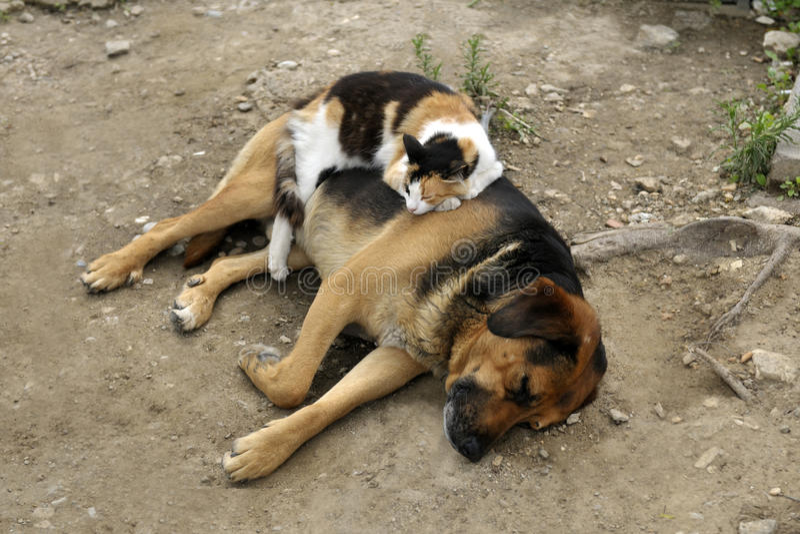 猫在狗睡觉户外 免版税库存图片