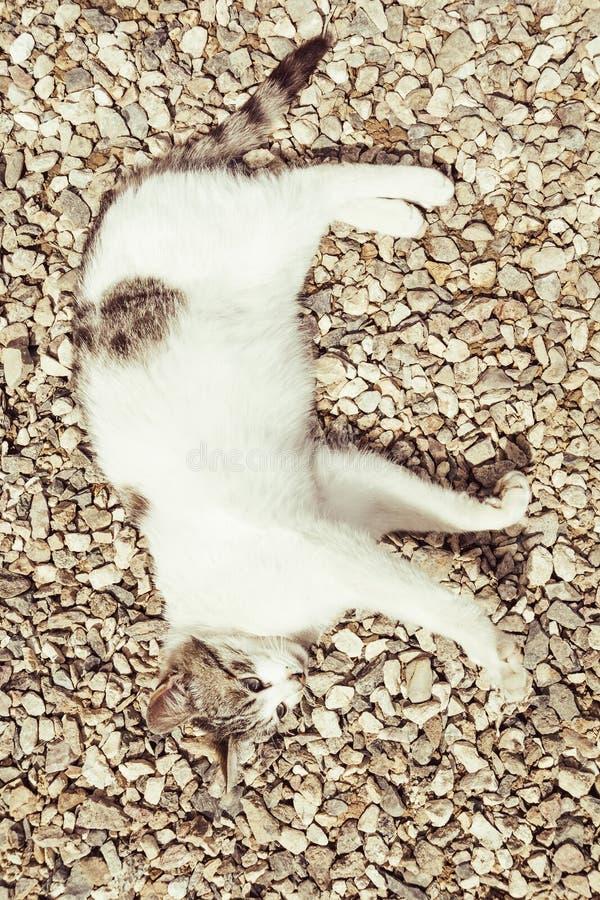 猫在石渣放置 免版税库存照片