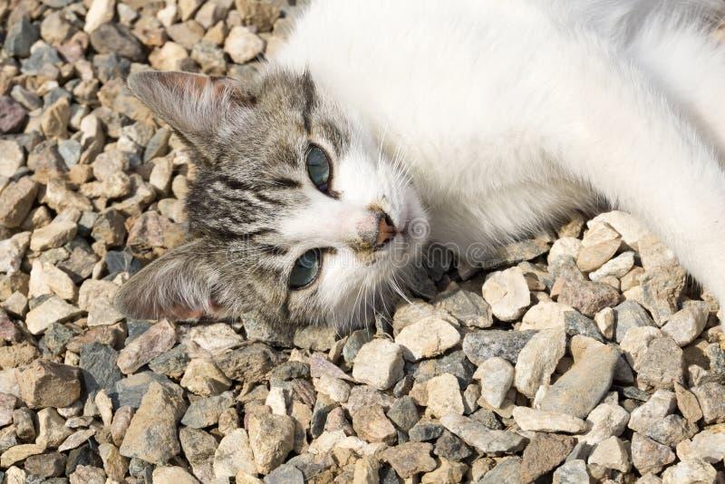 猫在石渣放置 库存照片
