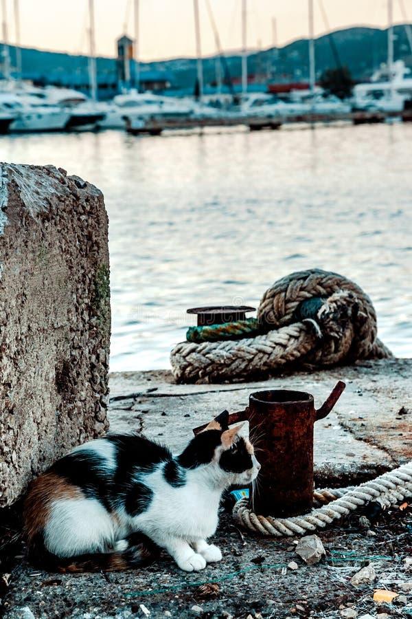 猫在码头 免版税库存照片