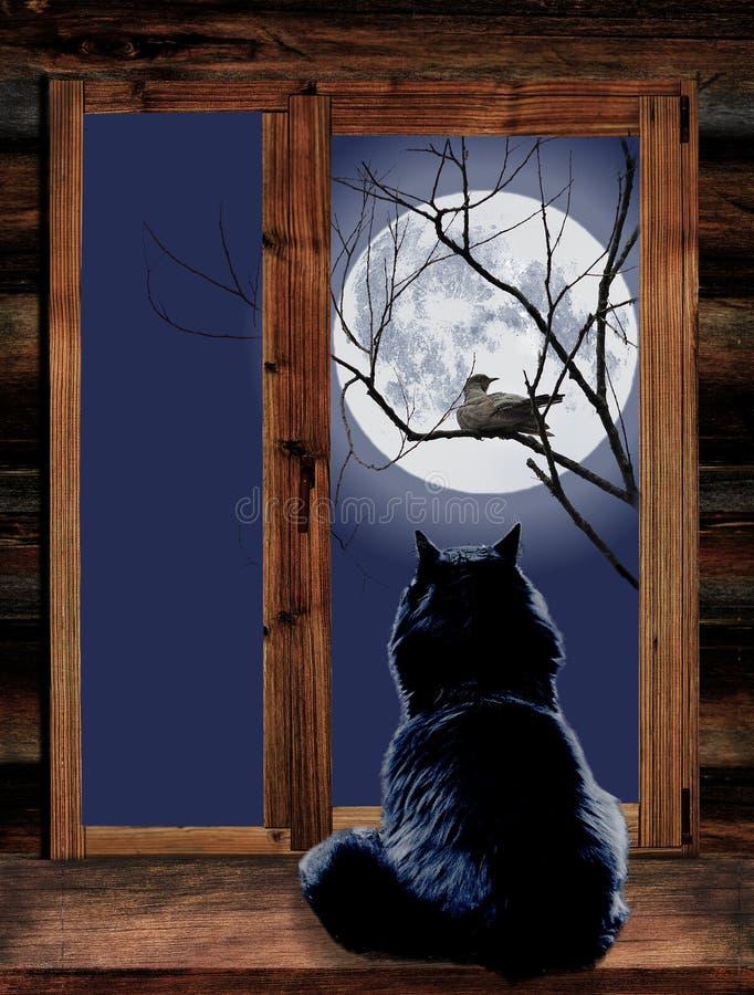 猫在窗口和鸟里在分支在被月光照亮 图库摄影