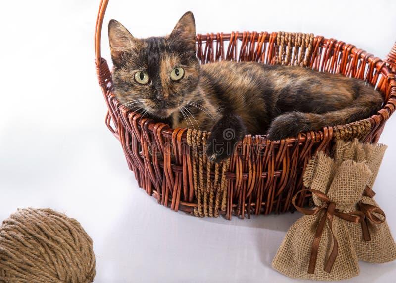 猫在篮子在 免版税库存照片