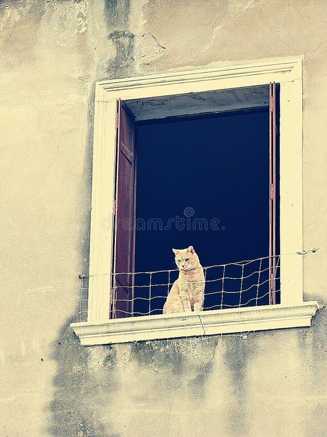 猫在视窗里 库存照片