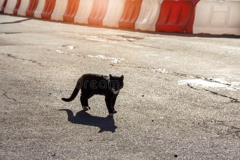 猫在路站立以白色和红色塑料路篱芭街道猫为背景 免版税库存照片