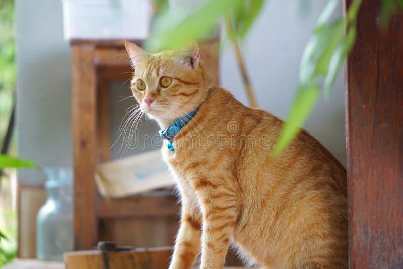 猫在躺着,瞪着一些可疑的东西 免版税库存照片