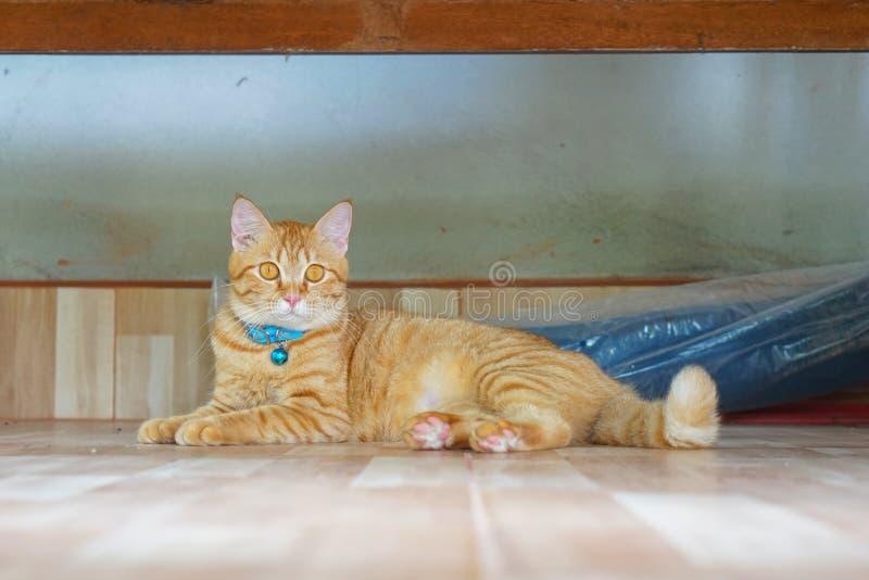 猫在躺着,瞪着一些可疑的东西 免版税库存图片