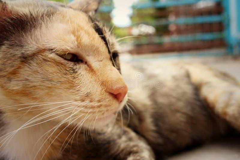 猫在水泥睡觉在公园 免版税库存照片