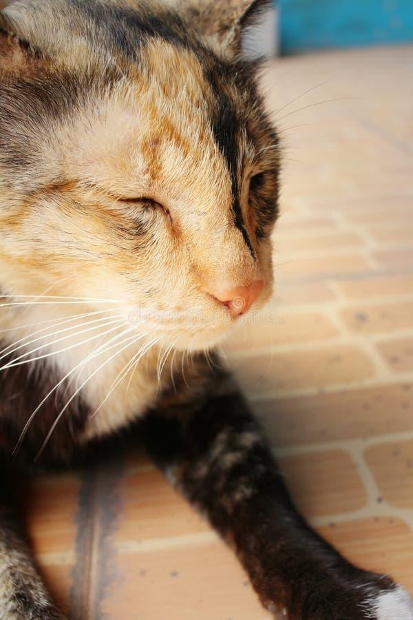 猫在水泥睡觉在公园 免版税图库摄影