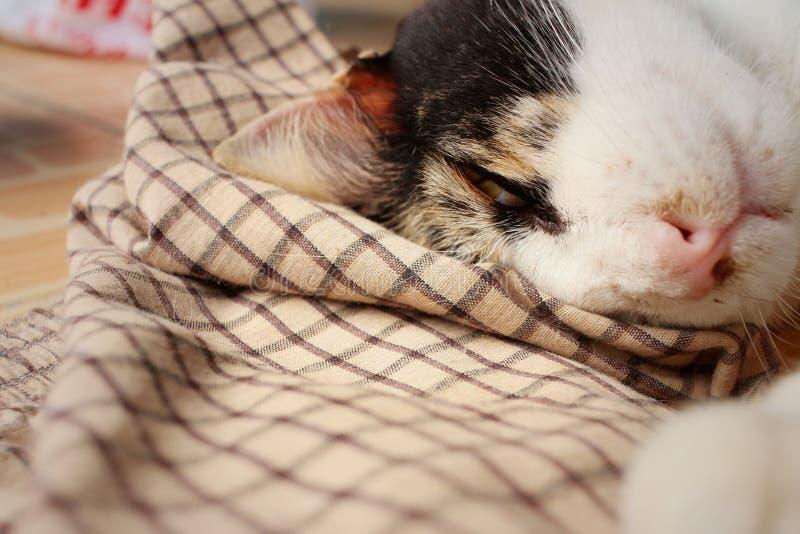 猫在水泥睡觉在公园 免版税库存图片
