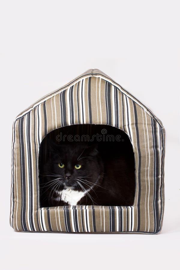 猫在他的房子里 免版税库存图片