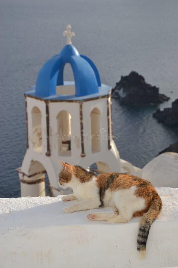 猫在Oia 库存图片