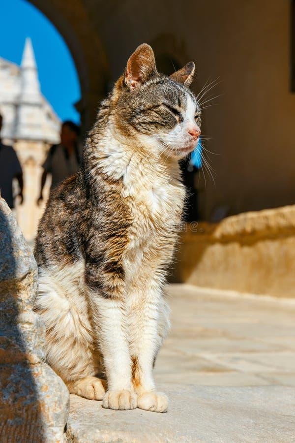 猫坐地面 免版税库存照片