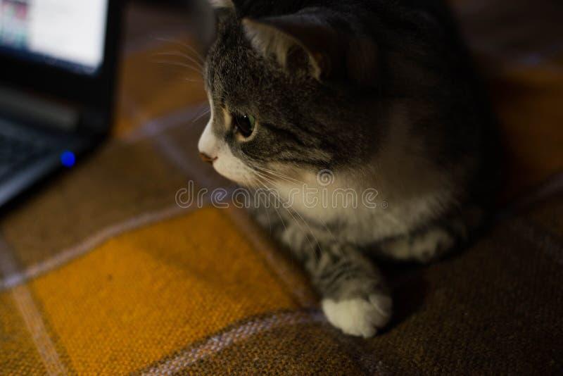 猫坐床 免版税图库摄影
