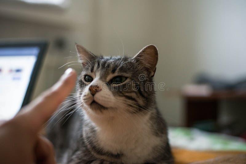 猫坐床 图库摄影