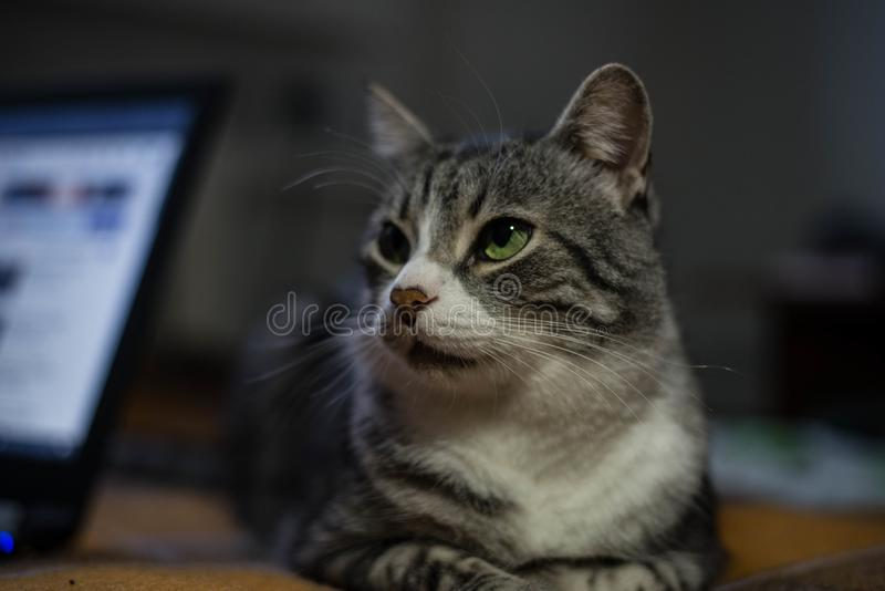 猫坐床 免版税库存图片