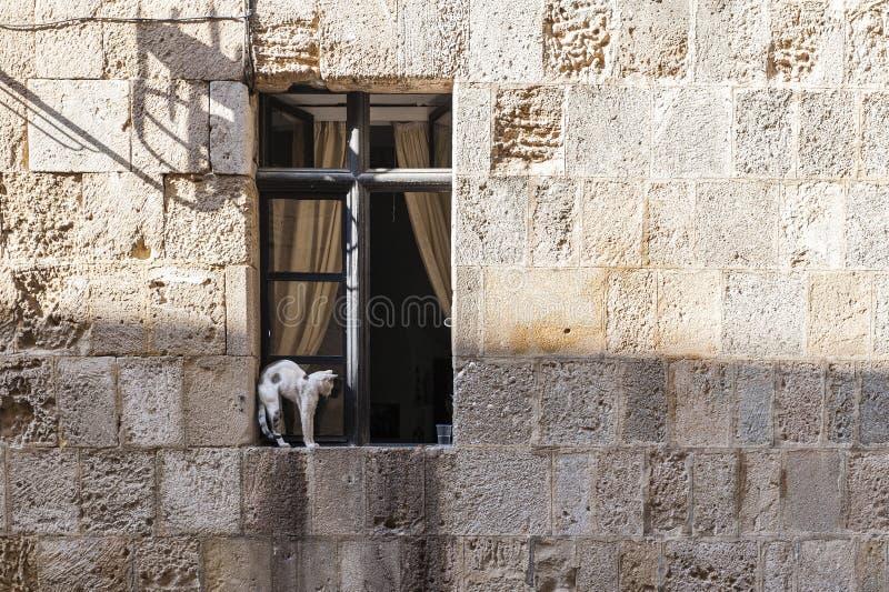 猫坐的视窗 图库摄影