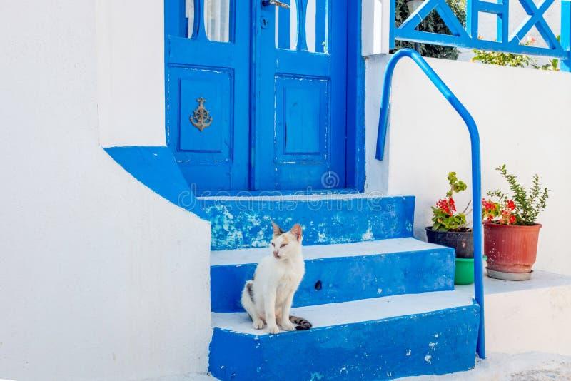 猫坐蓝色台阶在Thirasia,希腊 库存照片