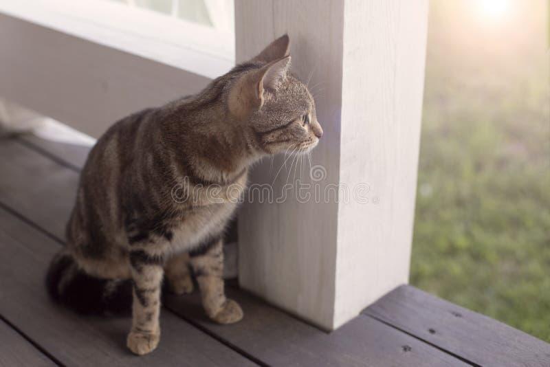 猫坐门廊 图库摄影