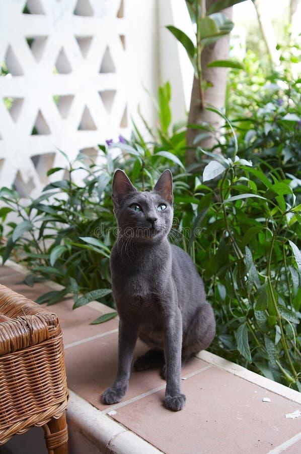 猫埃及人 库存照片