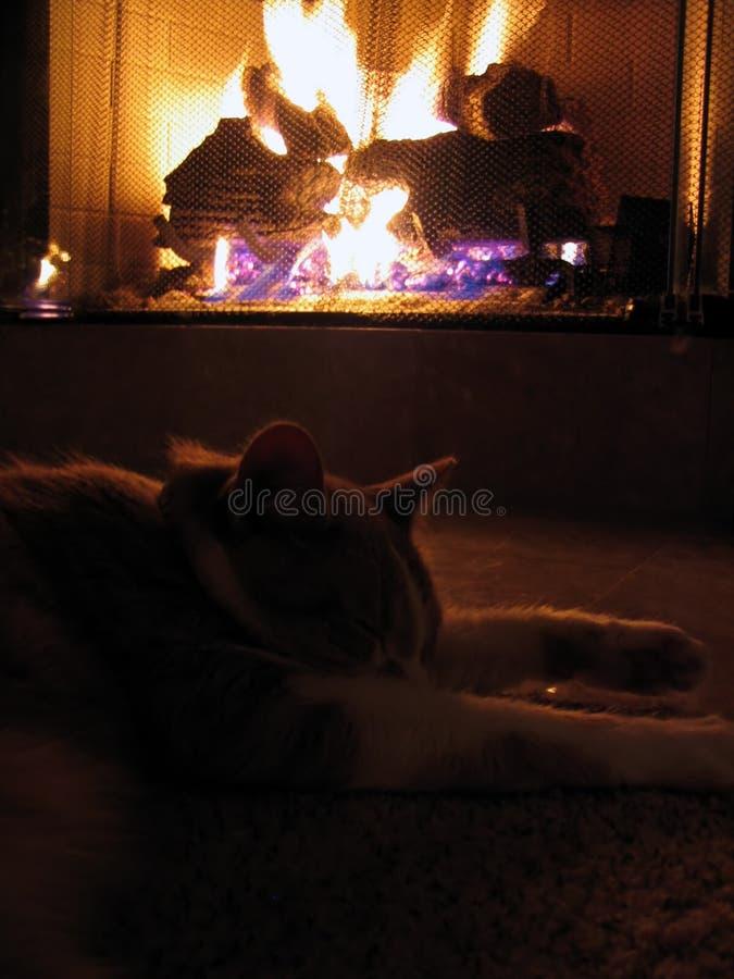 猫壁炉 图库摄影