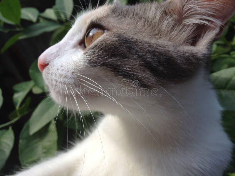 猫外形 免版税库存图片