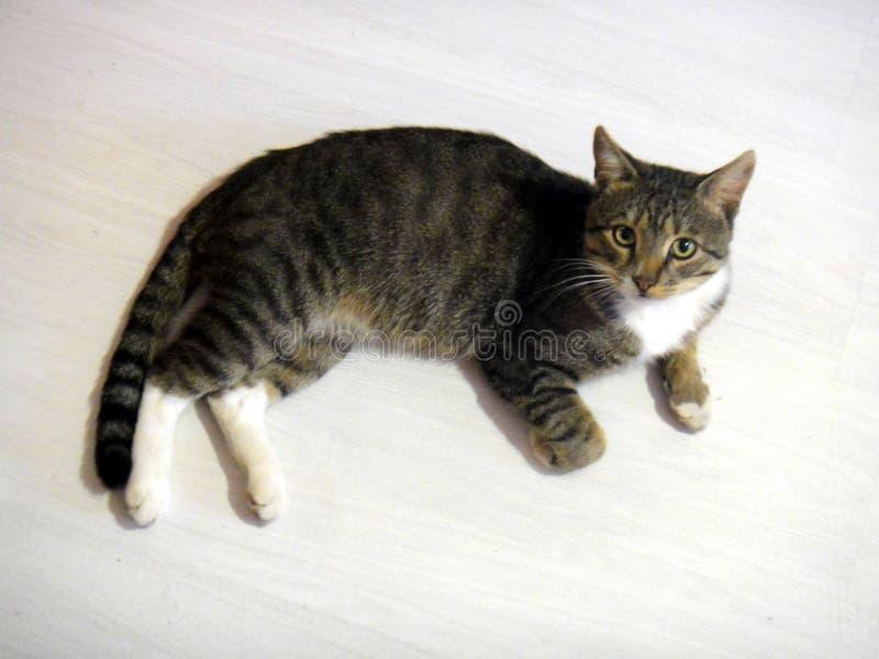 猫大型装配架 库存照片