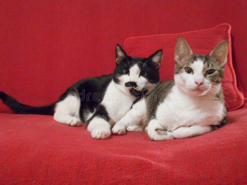 猫夫妇 免版税图库摄影