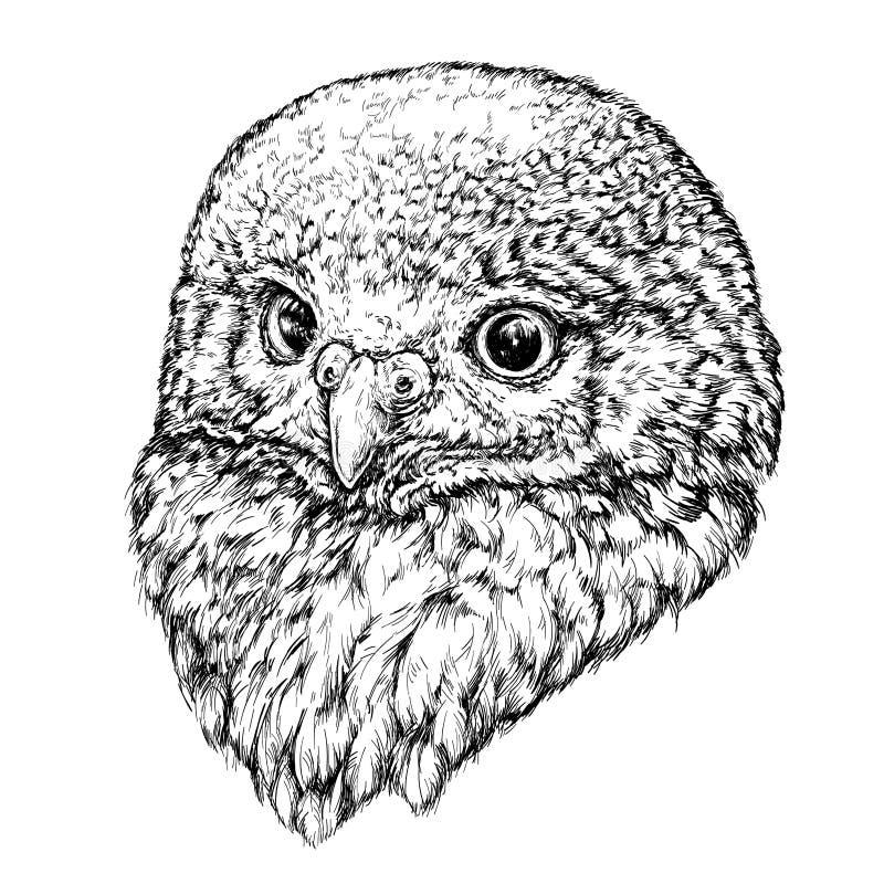 猫头鹰的手拉的例证 向量例证
